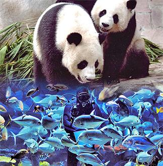 치앙마이 동물원 + 아쿠아리움 입장권