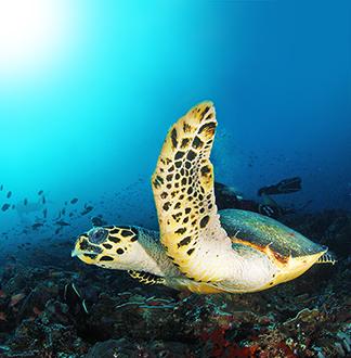 푸켓 산호섬 코랄리프 비치클럽 투어 (픽업/샌딩 포함)