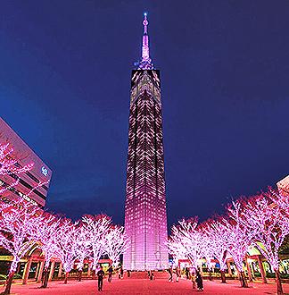 후쿠오카 타워 입장권