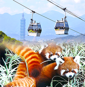 타이베이 마오쿵 케이블카 + 시립 동물원 입장권