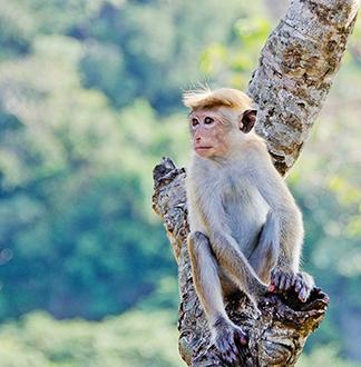 나트랑 원숭이 섬 투어
