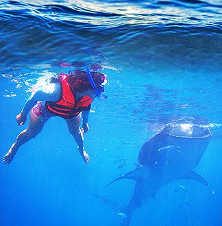 세부 오슬롭 고래상어 + 모알보알 호핑투어
