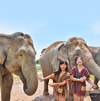 파타야 코끼리 정글 생츄어리(오전/오후) 투어 (픽업/샌딩 포함)