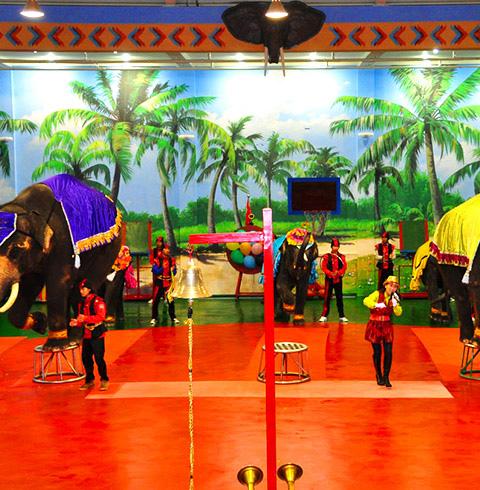 제주 점보빌리지 코끼리 공연 입장권+바나나 먹이주기